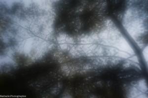 20130720 lever les yeux-6