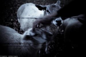 20150827 promenade avec Rimbaud en bandoulière web-5