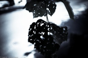 20150827 promenade avec Rimbaud en bandoulière web-9